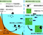 海洋生分解性プラスチックの開発